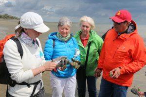 Bei einem Ausflug zur Austernbank erfahren Urlauber mehr zur Aufzucht der begehrten Schalentiere. Foto: djd/Kurverwaltung List