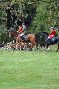 Begleitet werden die Reiter von der Hundemeute. Gut zu wissen: Lebendes Wild wird dabei nicht gejagt. Foto: djd/Solling-Vogler-Region